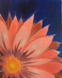 The image for Pink Gerber Daisy