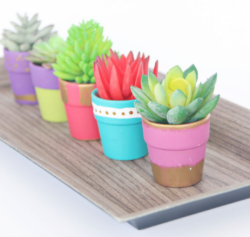The image for Succulent Potting